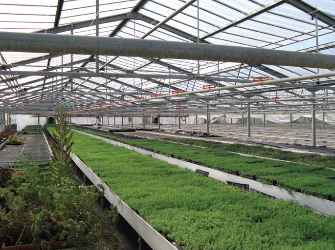 Greehouse green crops