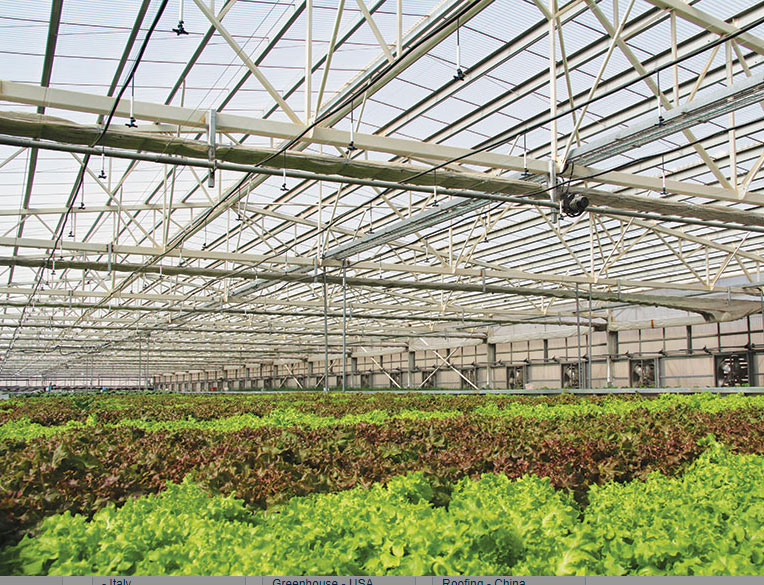 Polycarbonate Roofing  greenhouse Lettuce